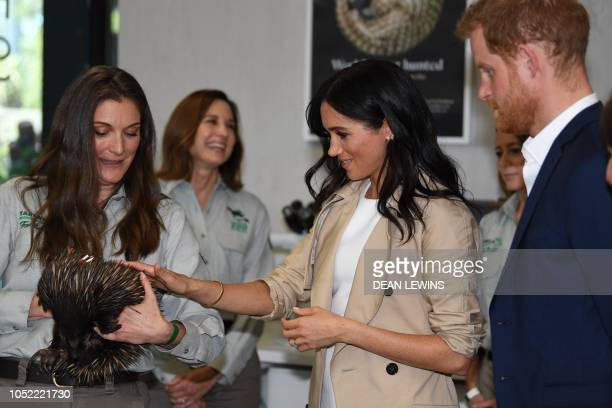 Britain's Prince Harry and his wife Meghan meet an echidna held by Michelle Shaw during a visit to Taronga Zoo in Sydney on October 16 2018 Prince...