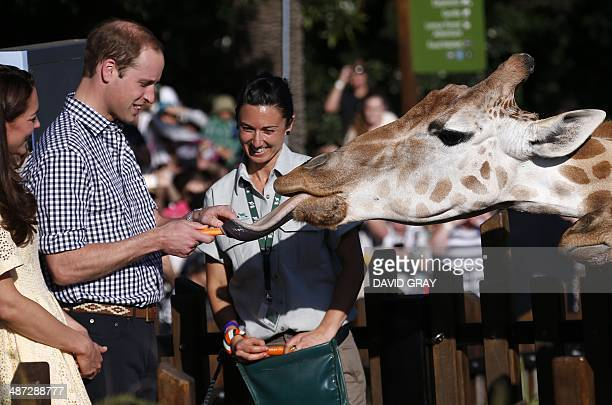 Britain's Prince William reacts as he and his wife Catherine the Duchess of Cambridge feed giraffes during a visit to Sydney's Taronga Zoo on April...