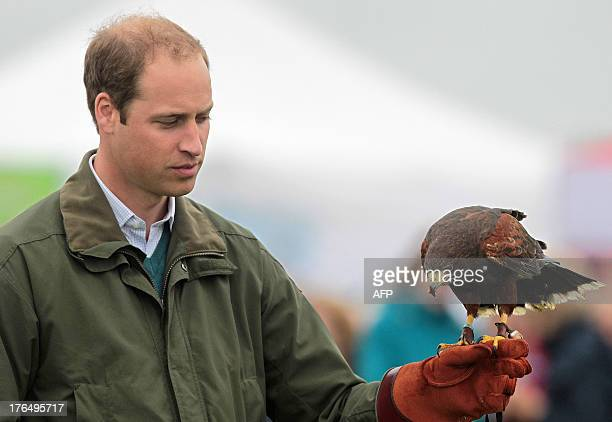 Britain's Prince William takes part in a falconry display as he attends the Anglesey Show in North Wales on August 14 2013 The Anglesey Show is the...