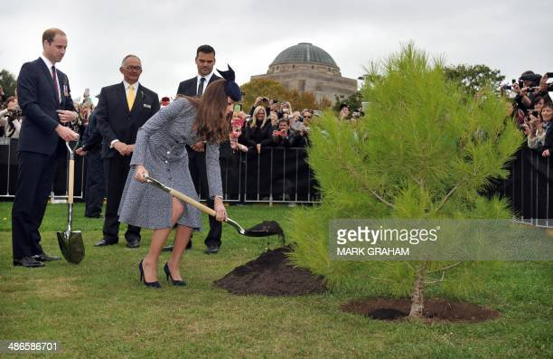 Britains Prince William watches as his wife Catherine, Duchess of Cambridge plants an Aleppo Pine seedling derived from seeds gathered after the...