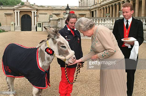 Britain's Queen Elizabeth II feeds a sugarlump to Tinker the Donkey, watched by Rachel Dancer from Telford, Shropshire, 12 June, after the Queen met...