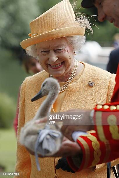 Britain's Queen Elizabeth II smiles as she is shown an orphaned cygnet at Oakley Court on the River Thames west of London on July 20 during a swan...