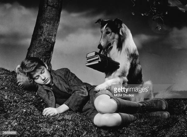 British actor Roddy McDowall 91928 1998 lies down under a tree while animal actor Lassie stands gaurd over him holding schoolbooks in her teeth in a...