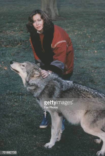 British actress Jenny Agutter with a wolf during the filming of 'An American Werewolf in London' UK 1981