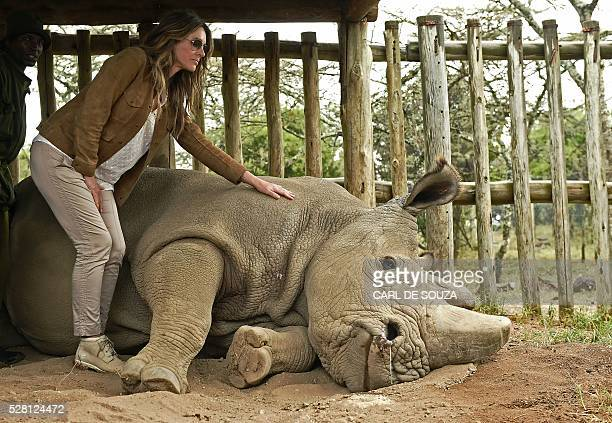 British actress Liz Hurley poses next to the last male northern white rhino sudan at Ol Pejeta Sanctuary during the Giants Club Summit conservation...