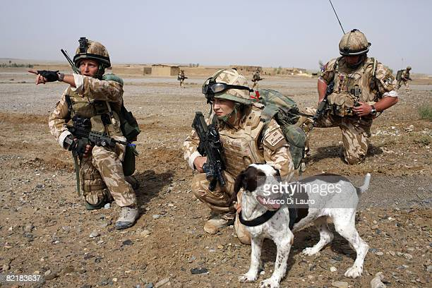 British Army soldier from the Royal Army Veterinary Corp Lcpl Marianne Hay 24 from Aberdeeenshire and her arms and explosives dog Leanna attached to...