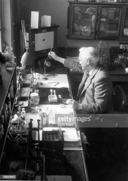 British bacteriologist and Nobel laureate Sir Alexander Fleming using a bunsen burner in his laboratory at the WrightFleming Institute St Mary's...