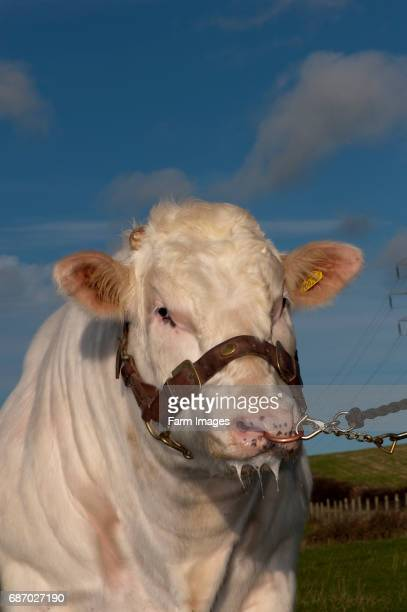 Wayne Hutchinson/Farm Images/Universal Images Group via Getty Images