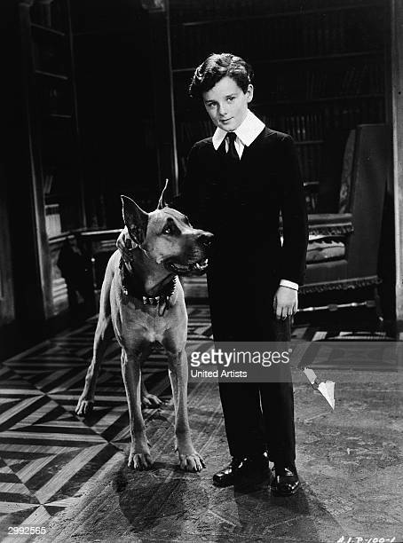 British child star Freddie Bartholomew stands in the library of Dorincourt Castle with 'Prince the Great Dane' in a scene from 'Little Lord...