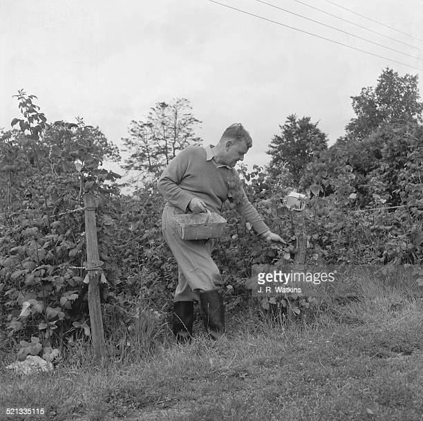British Conservative politician Quintin Hogg Baron Hailsham of St Marylebone at work on his dairy farm at Carters Corner Place Carters Corner Nr...