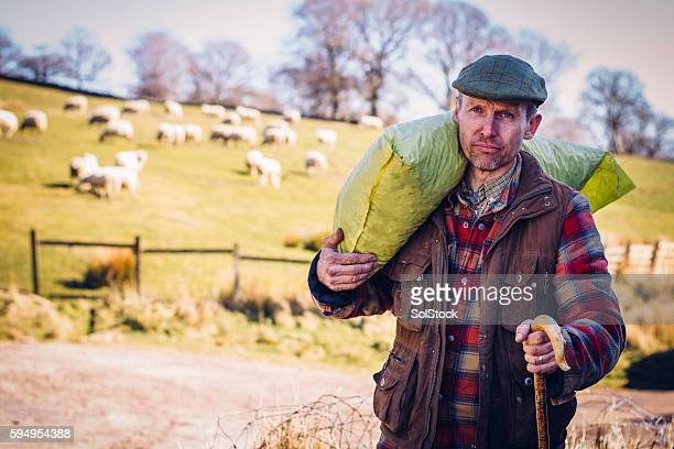 british farmer - shepherd stock pictures, royalty-free photos & images