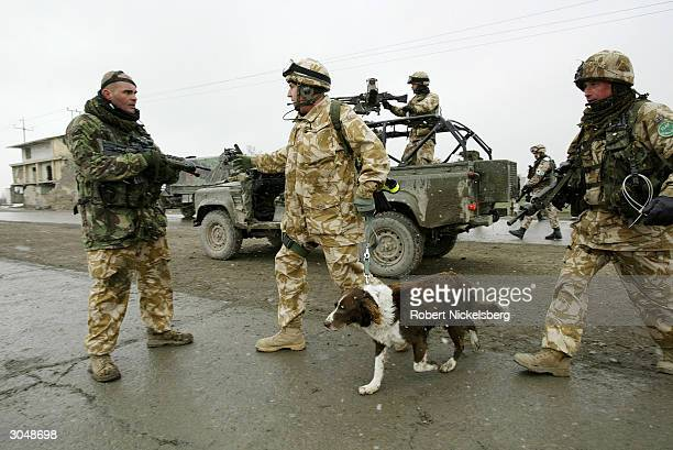 British ISAF soldier leads a bomb sniffing dog near the site where an Afghan suicide bomber exploded a taxi packed with explosives next to two...