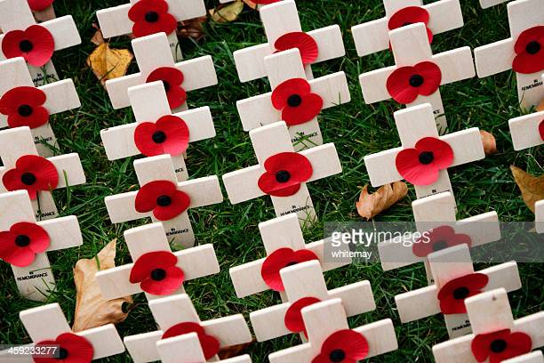 british legion field of remembrance - remembrance day poppy stock photos and pictures
