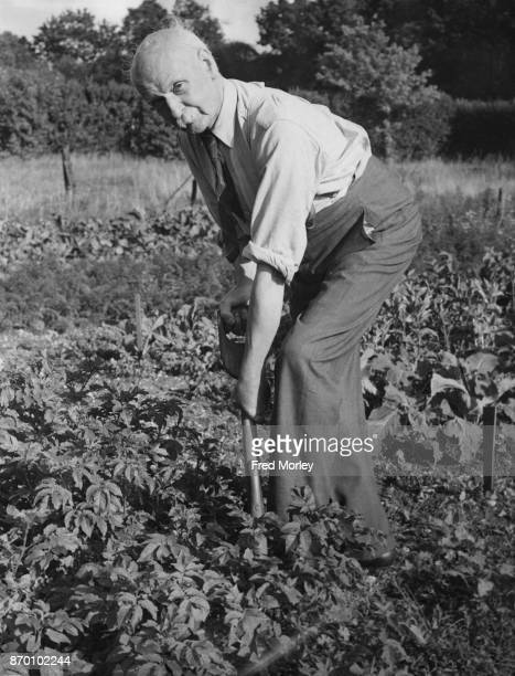 British physiologist Sir Leonard Erskine Hill at work on his allotment as part of the 'Dig for Victory' campaign during World War II UK 2nd September...