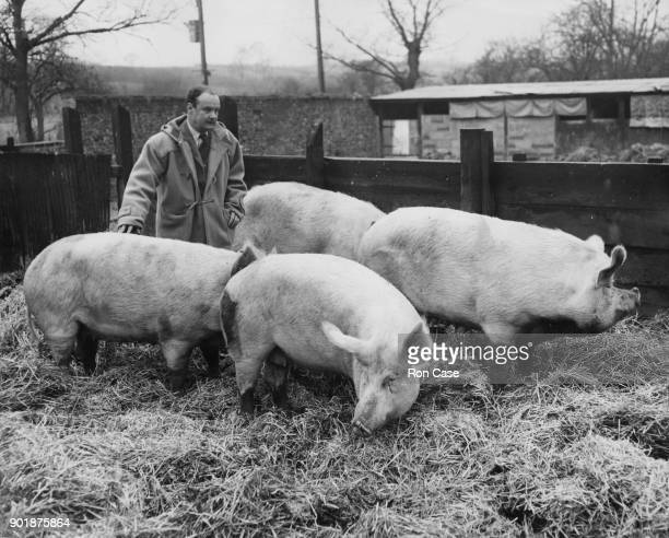 British politician John Hare the new Minister of Agriculture with some of his sows on his farm Cottage Farm in Little Blakenham Suffolk 11th January...