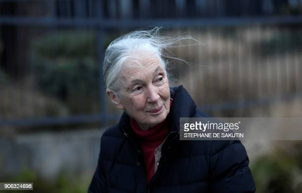 British primatologist and UN peace ambassador Jane Goodall the world's famous authority on chimpanzees poses for a photograph on January 18 2018 in...