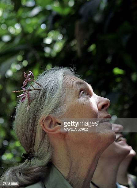 British primatologist Jane Goodall contemplates the flora 02 September at La Selva Biological Station in Sarapiqui 80kms noreast from San Jose...