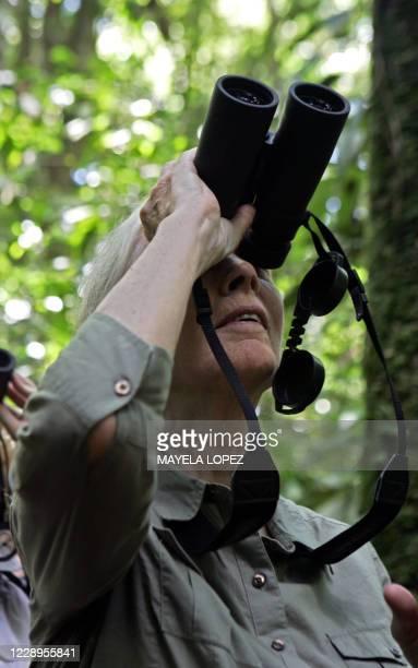 British primatologist Jane Goodall looks for monkeys 02 September at La Selva Biological Station in Sarapiqui, 80 km northeast of San Jose. Goodall,...