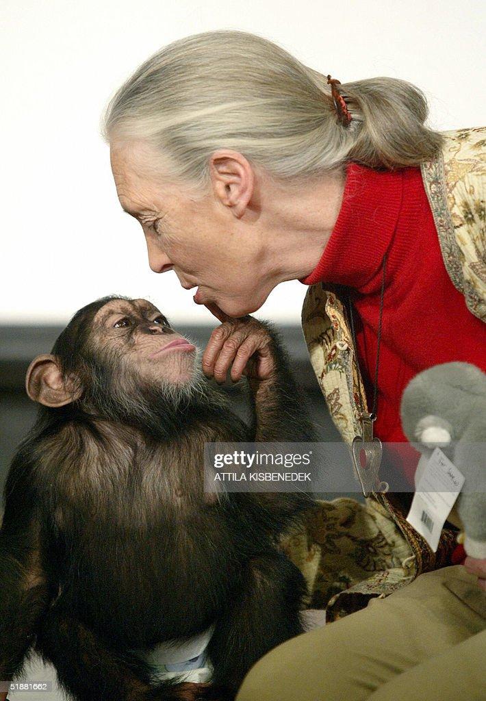 British primatologist Jane Goodall, the : News Photo