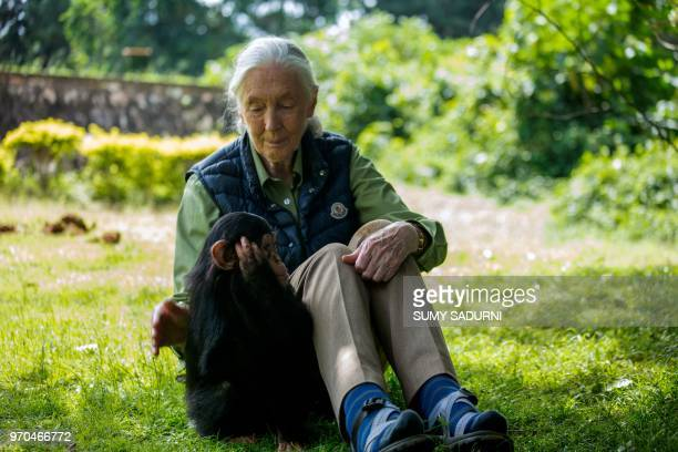 British primatologist Jane Goodall visits a chimpanzee rescue center on June 9 2018 in Entebbe Uganda During her visit at the Uganda Wildlife...