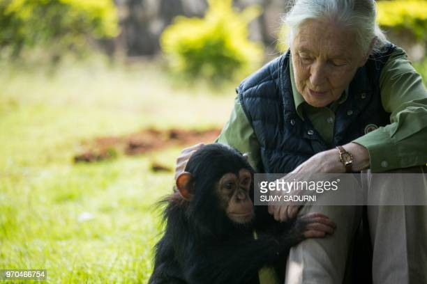 British primatologist Jane Goodall visits chimp rescue center on June 9 2018 in Entebbe Uganda During her visit at the Uganda Wildlife Education...