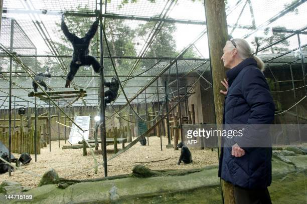 British Primatologist Jane Goodall visits the Gaia Zoo in Kerkrade on May 18 2012 Goodall pays a threeday visit to the Netherlands AFP PHOTO/ANP...