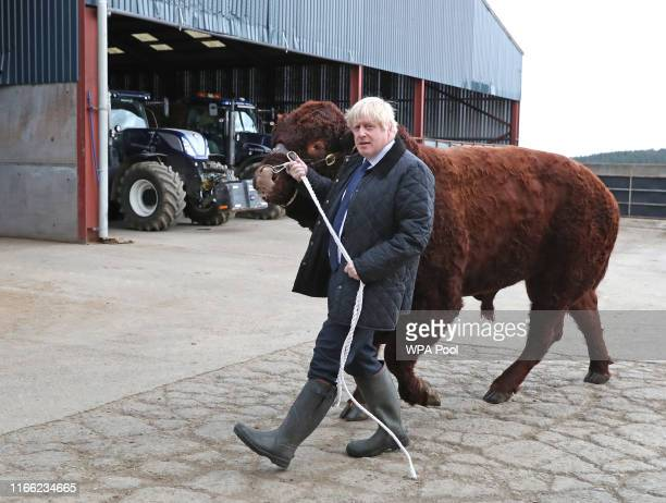 British Prime Minister Boris Johnson leads a bull around a pen as he visits Darnford Farm in Banchory near Aberdeen on September 6, 2019 in Aberdeen,...