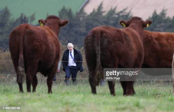 British Prime Minister Boris Johnson looks at cattle as he walks across a field as he visits Darnford Farm in Banchory near Aberdeen on September 6...