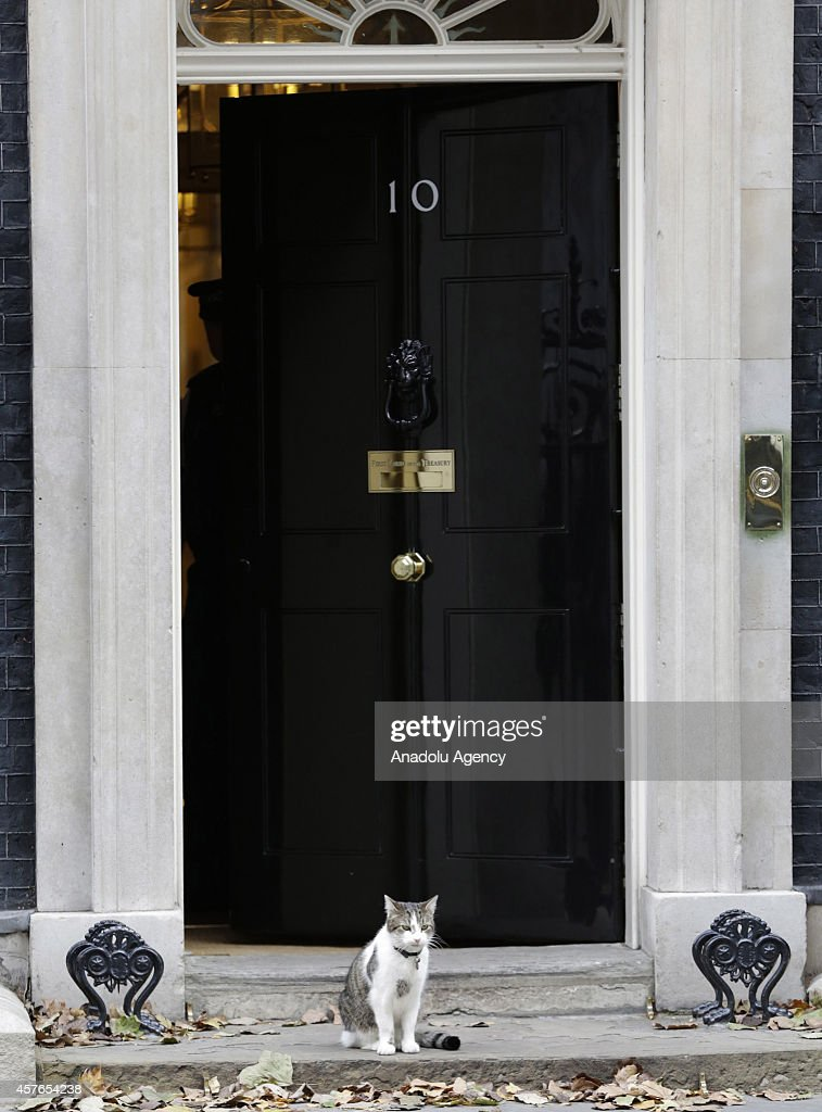 British Prime Minister David Cameron's cat Larry at 10 Downing Street, central London, on October 22, 2014.