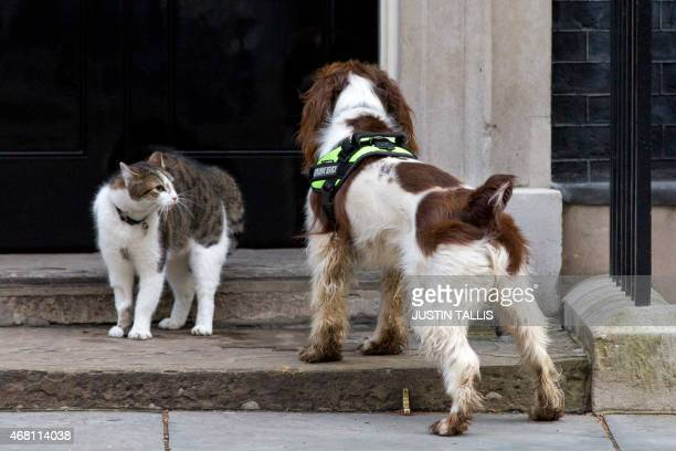 British Prime Minister David Cameron's Cat Larry comes face to face with a police dog called Bailey as it does security checks outside the door of 10...