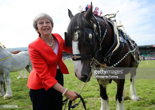 British Prime Minister Theresa May poses with a shire horse named Tumble who won first prize in it's category during a visit to the Royal Welsh Show...