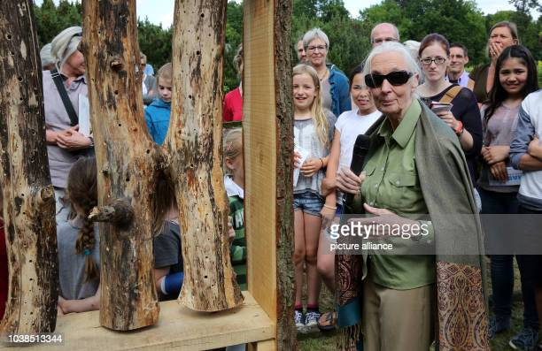 British researcher environmental activist and UNpeace ambassador visits the botanical garden in Berlin and opens a 'bee hotel' in the context of a...
