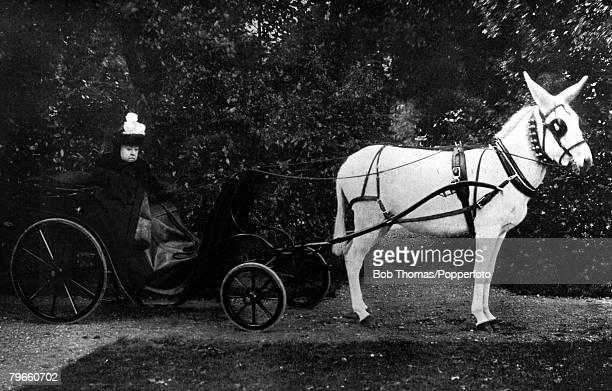 British Royalty 16th April 1900 Her Majesty Queen Victoria is pictured driving her famous white donkey in the grounds of the Viceregal Lodge Phoenix...