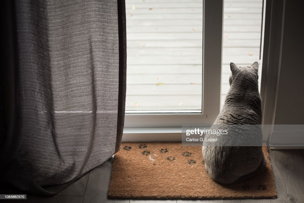 Cat Sitting On Door Mat With Paw Prints