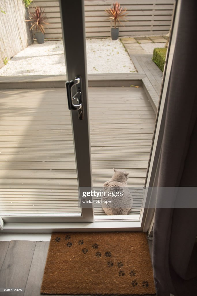 British Short Hair Cat Sitting On Zen Garden Next To Patio Door : Stock  Photo