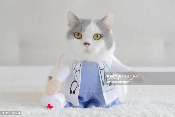 british shorthair cat dressed as a doctor - funny cats stock pictures, royalty-free photos & images