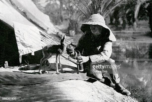 British soldier feeding a gazelle in Mesopotamia during World War 1 1916 Present day Iraq