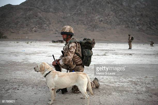 British Soldier from the Royal Army Veterinary Corp and his arms and explosive search dog attach to the British paratroopers from 3rd Battalion The...