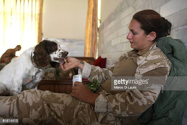 British Soldier from the Royal Army Veterinary Corp Lcpl Marianne Hay 23yearsold from Aberdeenshire feeds her arms and explosive search dog Leanna on...