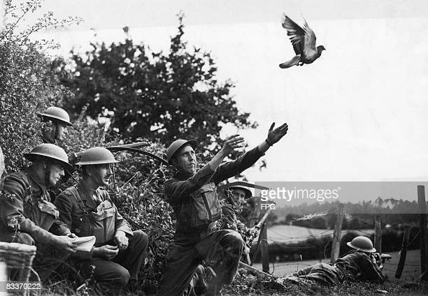 British soldiers in the south of England train a carrier pigeon to deliver messages during World War II 15th August 1940