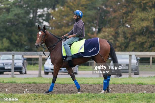 British thoroughbred racehorse Enable training at Newmarket on October 5 2018 in Newmarket England