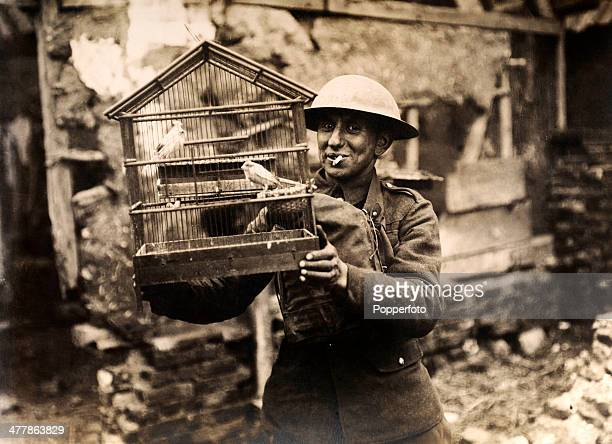 A British Tommy has rescued two canaries from a ruined house on the Western Front during World War One circa 1915