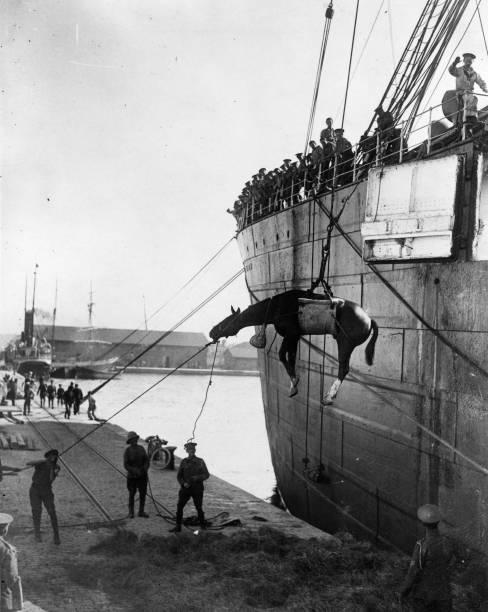 British troops landing horses from a ship at Salonika...
