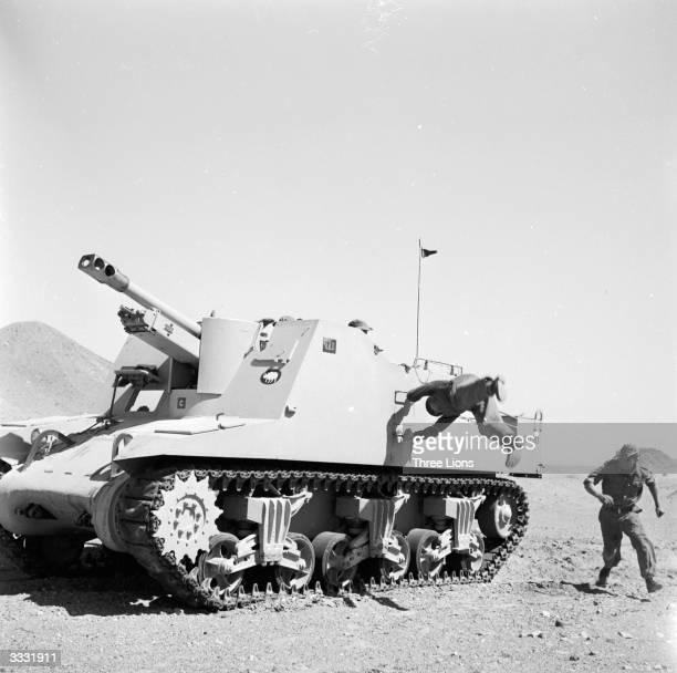 British troops undergoing rigorous training in desert warfare during the Suez crisis