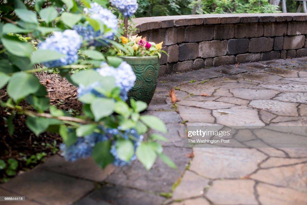 Backyard Renovation   Raleigh, NC : News Photo