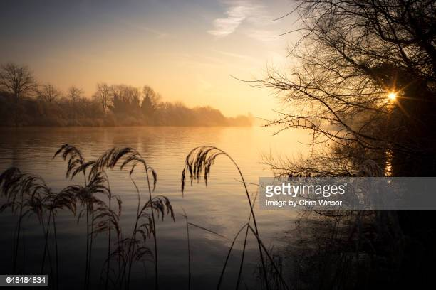 broads winter dawn - reed grass family stock photos and pictures