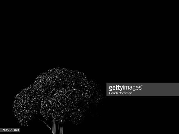 Broccoli on black backdrop