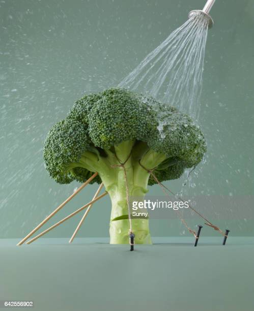 Broccoli stalk held up by ropes, sprayed with water to keep fresh