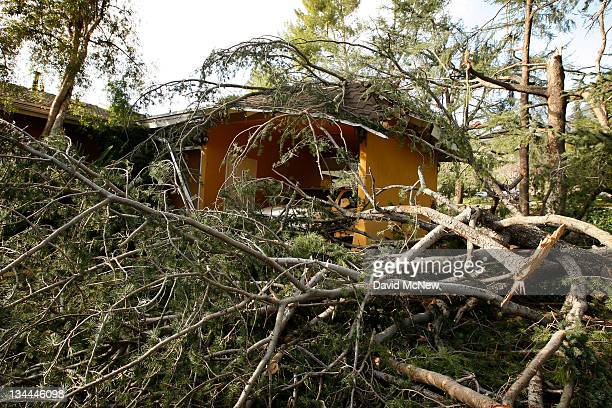 Broken branches and fallen trees nearly engulf a house as strong Santa Ana Winds cause the worst local wind damage in decades on December 1 2011 in...