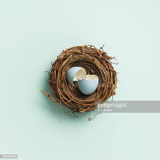 Broken egg inside nest